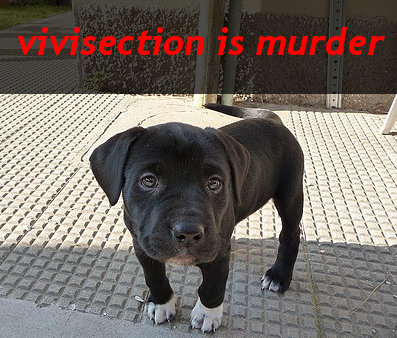 vivisection is murder